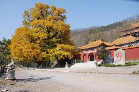 刷中国银行信用卡,享城顶山生态旅游区9折优惠
